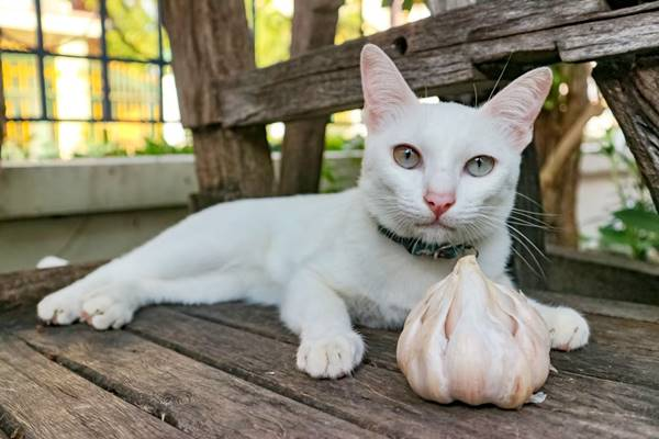 aglio fa male ai gatti