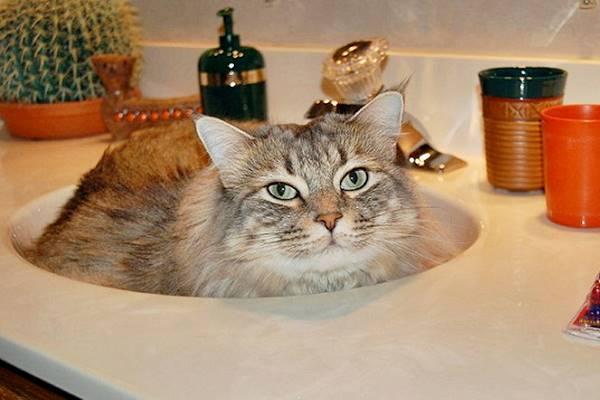 gatto che dorme nel lavandino