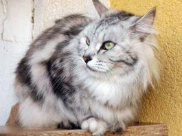 gatto appollaiato su una mensola