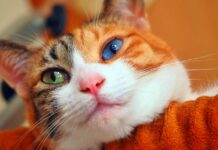 gatto che riposa sul divano