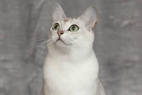 sguardo dolce del gatto