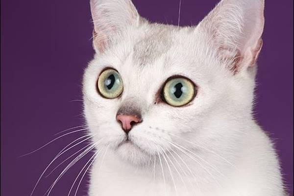 sguardo vispo del gatto