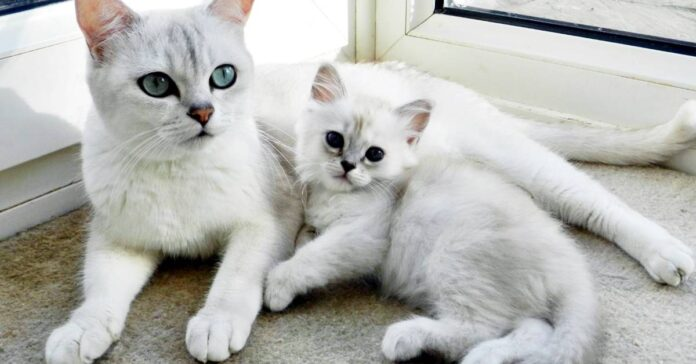 mamma gatta insieme al suo gattino