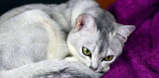 gatto che sta male come prendersene cura
