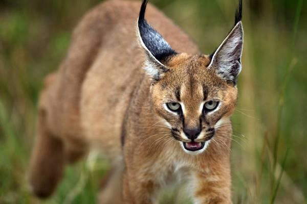 gatto che vive nella natura selvaggia