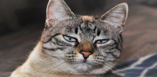 gatto sguardo poco convinto
