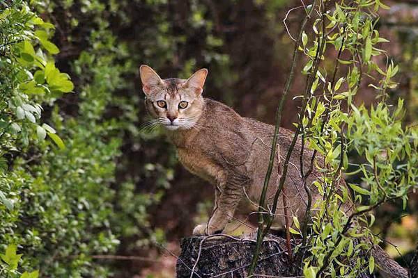 gatto che vive nella natura