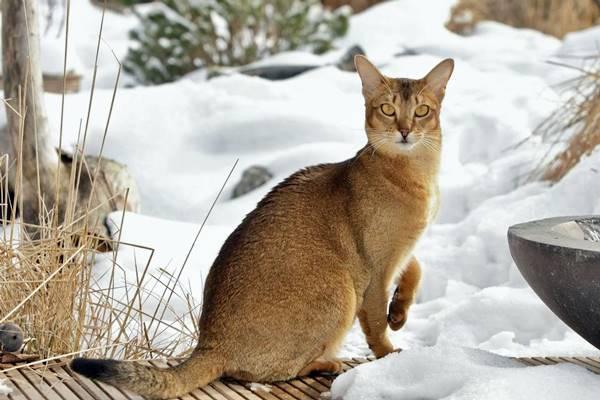 gatto tabby di colore marrone
