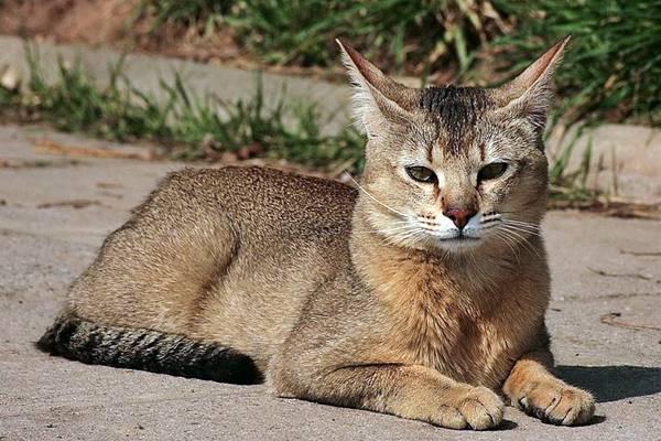 gatto che riposa per terra