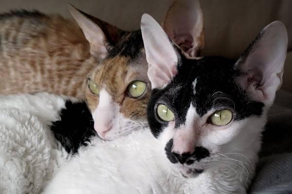 due gatti che dormono insieme