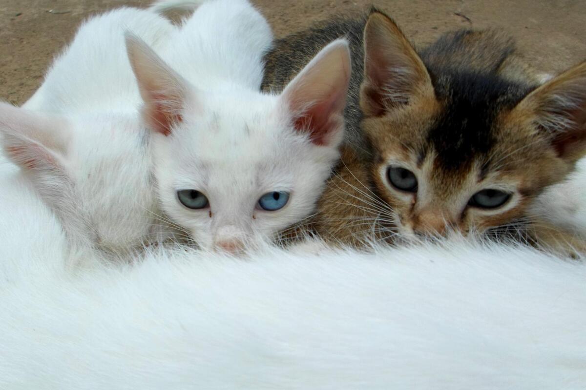 gattini che succhiano il latte