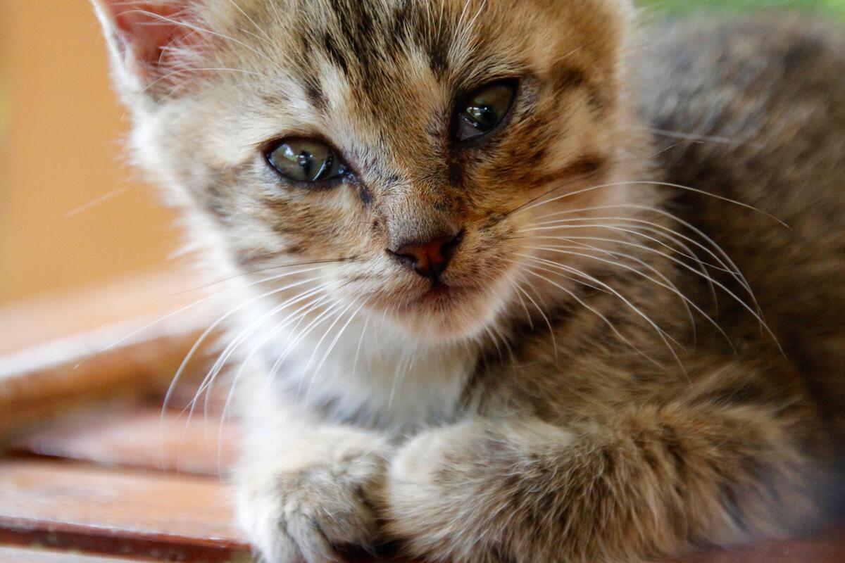 gattino con occhi sporchi