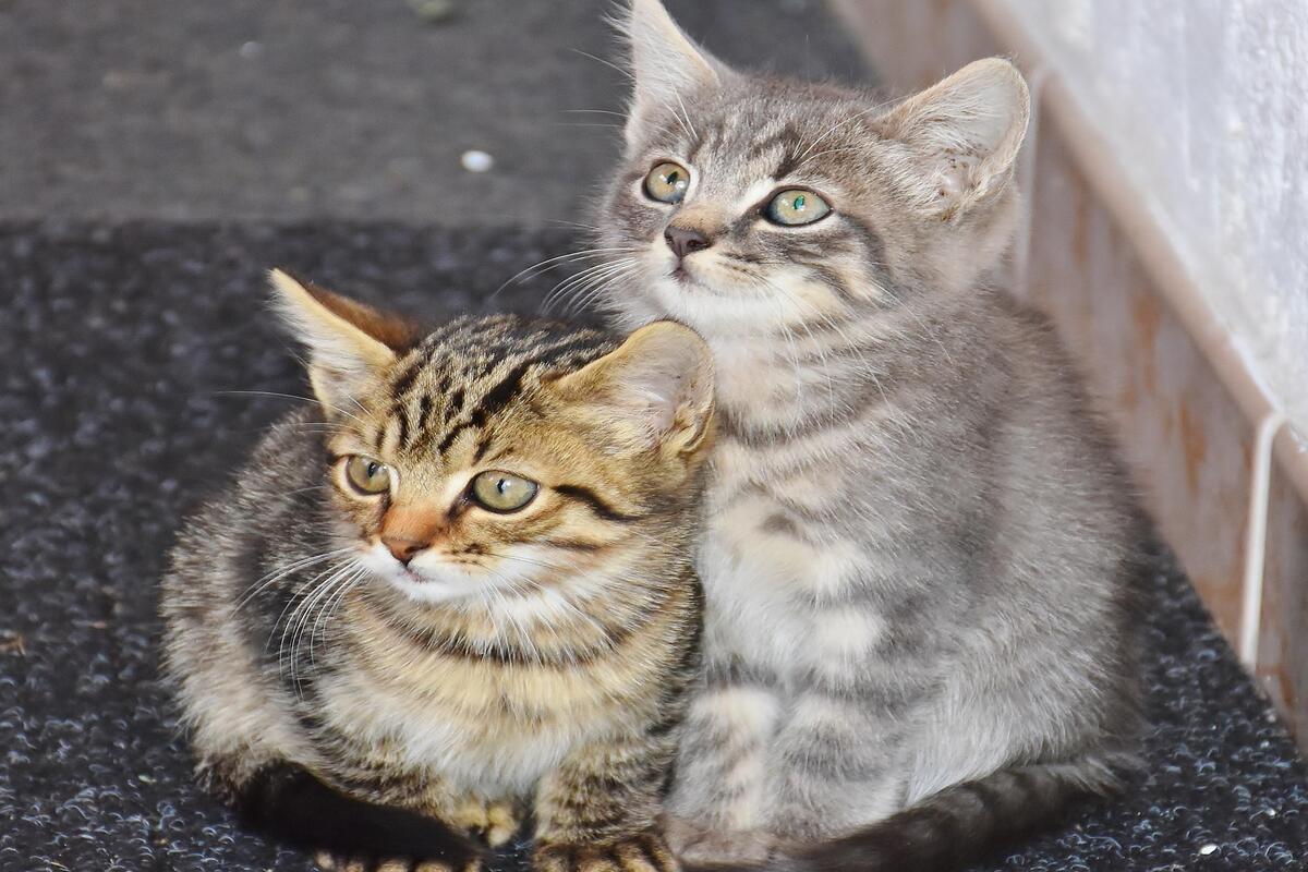 gattini randagi in strada