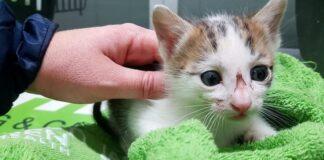 gattino coricato