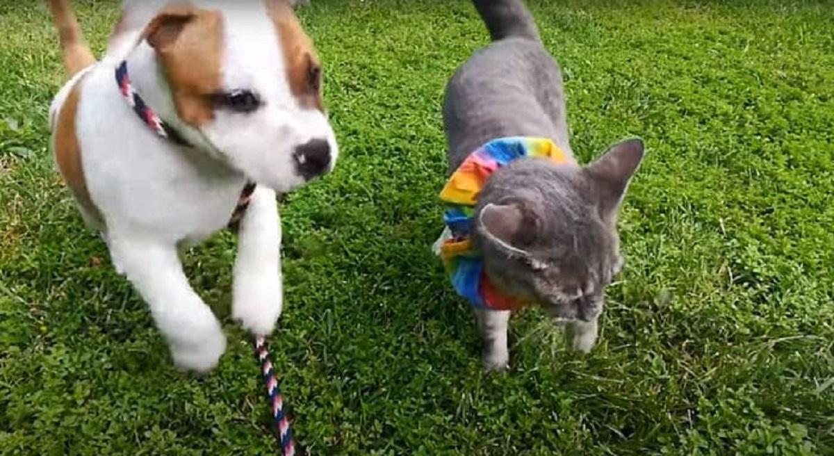 Elvis il cane e Cheerio il gatto