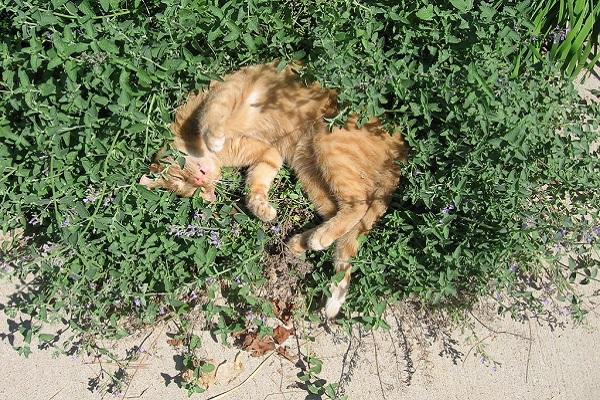 gattino in mezzo alle piante