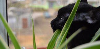 gattino morde le piante