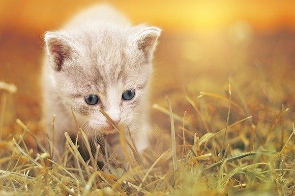 gattino si regge sulle zampette