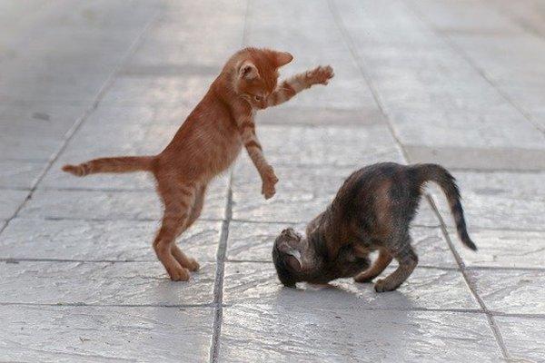 gattino che gioca con fratellini