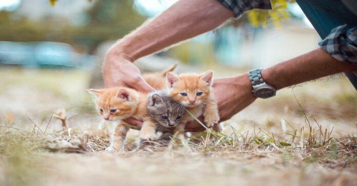gattino inizia a camminare