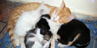 gattini e cani