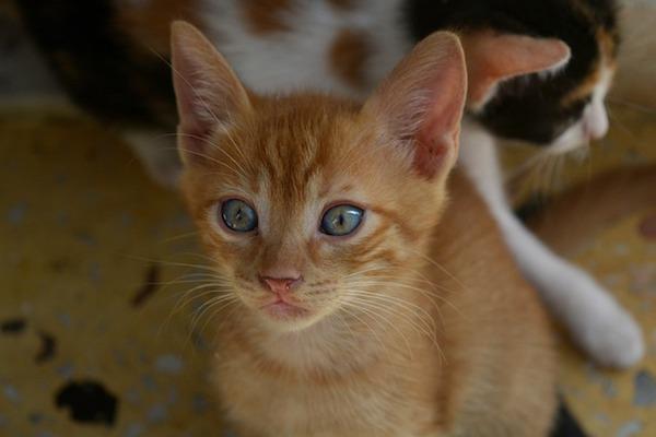 gattino segue e vuole attenzioni