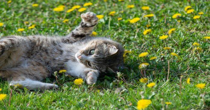 gattino segue padrone e gioca sul prato
