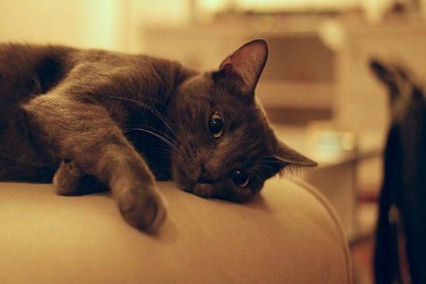 gattino si fa le unghie ovunque