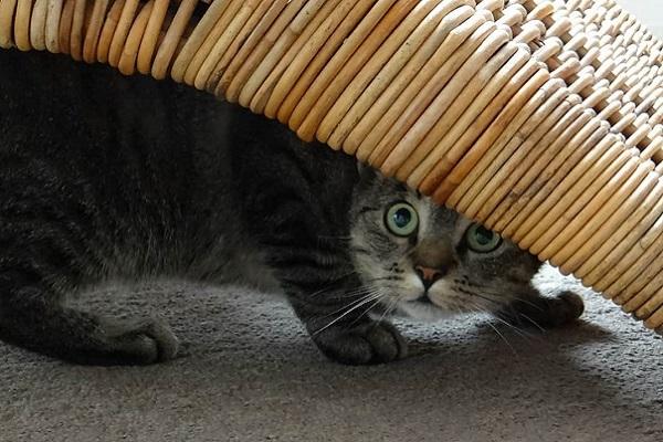 gattino spaventato da qualcosa