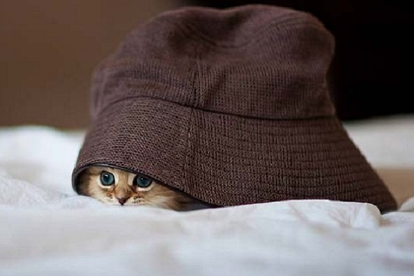 gattino sotto il cappello