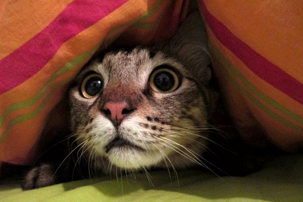 gattino che ha paura