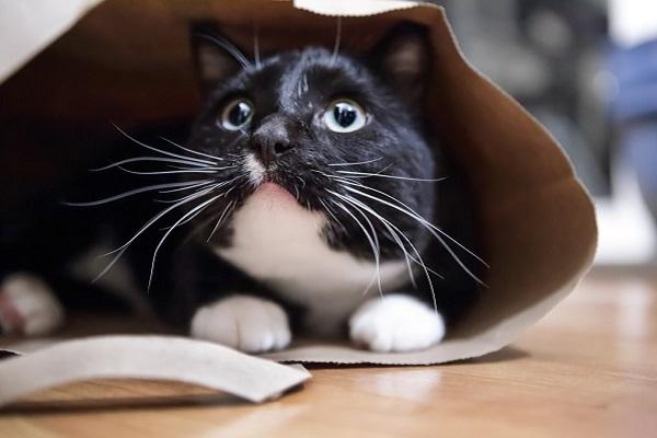gatto dentro un sacchetto di carta