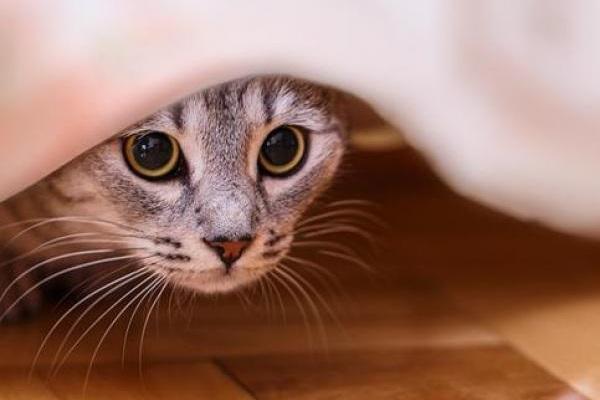 gattino sotto il letto