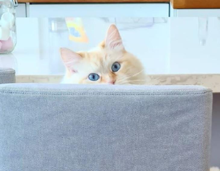 papouille gatto maestro mestiere