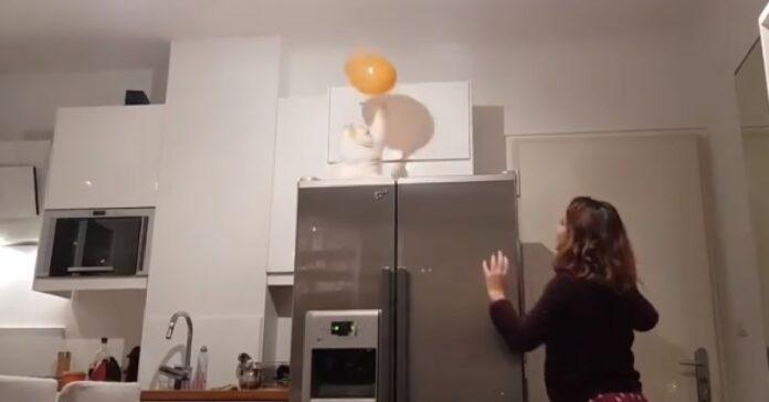 gatto ragazza giocano palla cucina