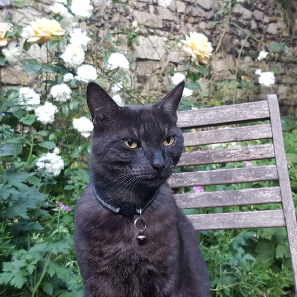 gatto leo popolare social messa