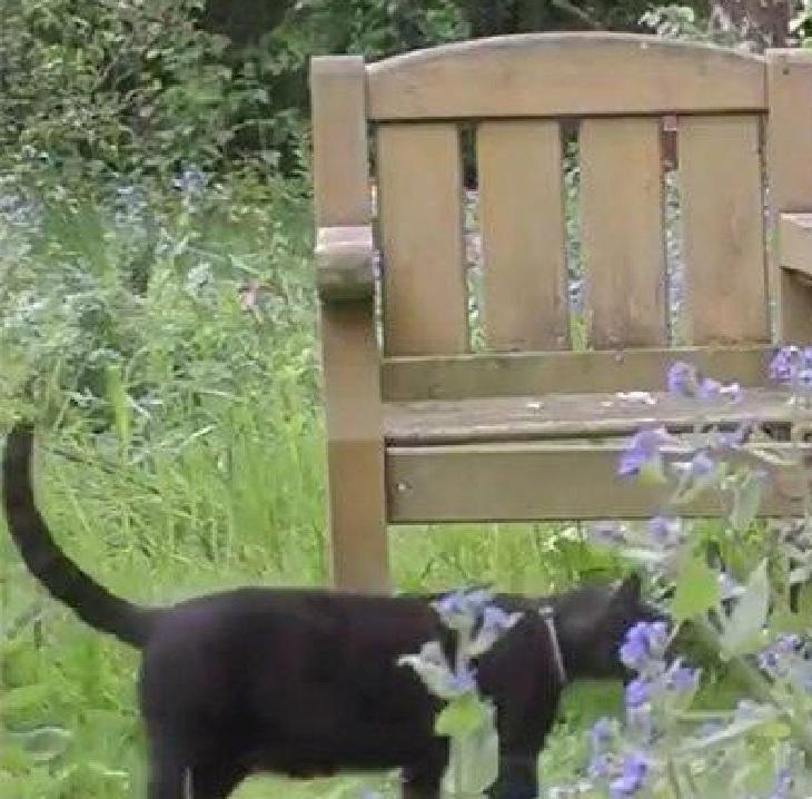 gatto leo cattedrale canterbury
