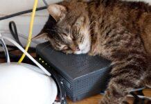 gatto dorme tra cavi elettrici