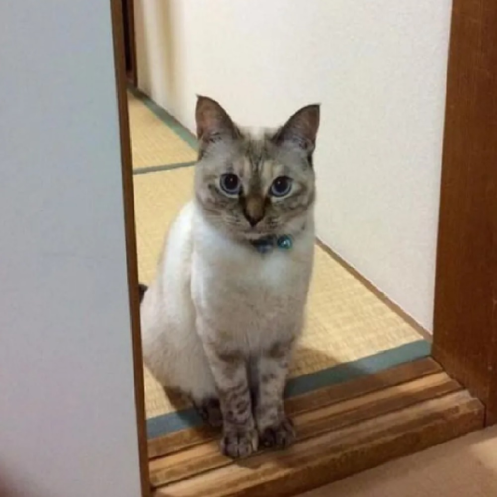 gatto vell-chan vita nuova