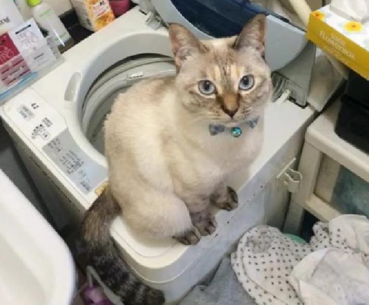 gatto vell-chan lavatrice preferita