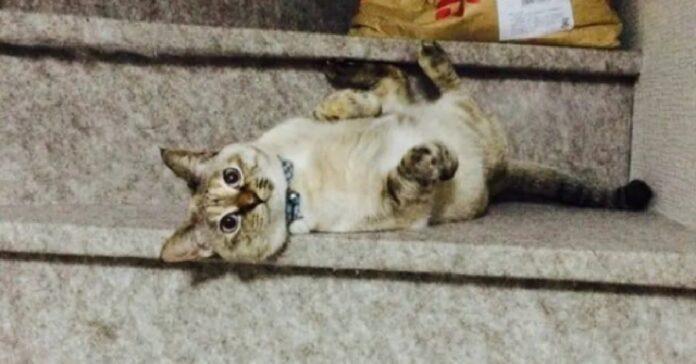 gattino sceglie da chi farsi adottare