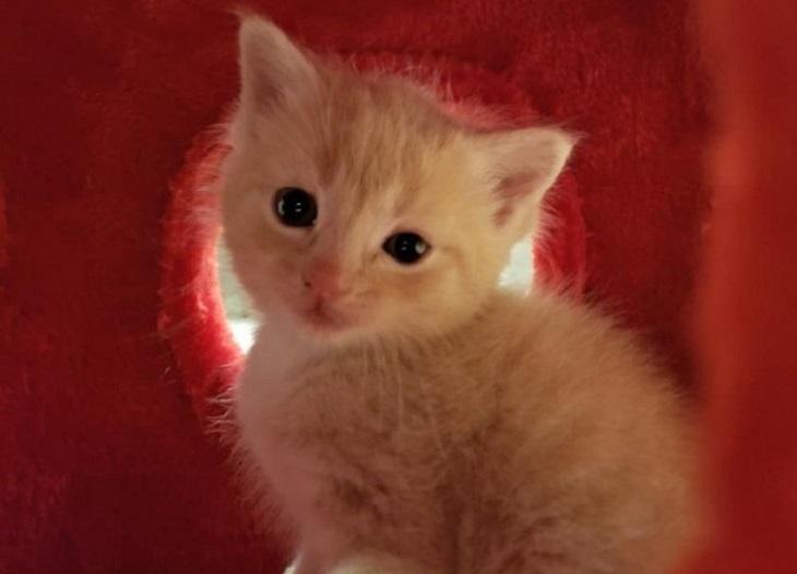 mamma remony gattini salvati