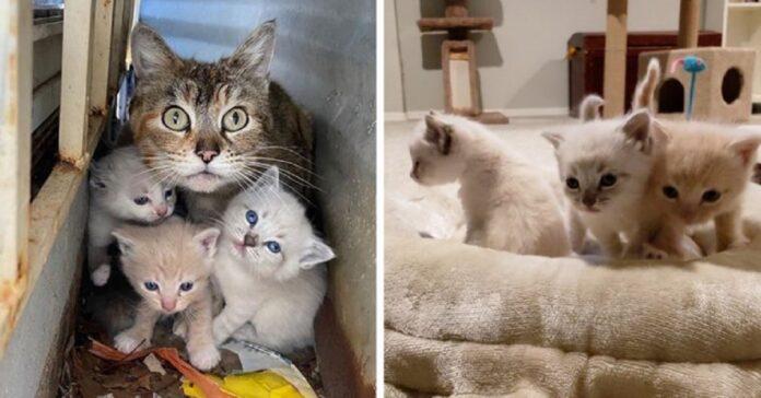 salvataggio mamma remony e suoi gattini