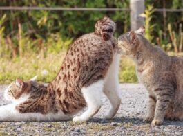 gatto conosce gatto