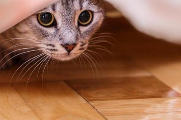 gatto sotto il tavolo