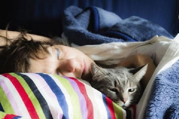 la testa di un gatto sbuca da dietro un cuscino