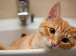 un gatto nel lavandino