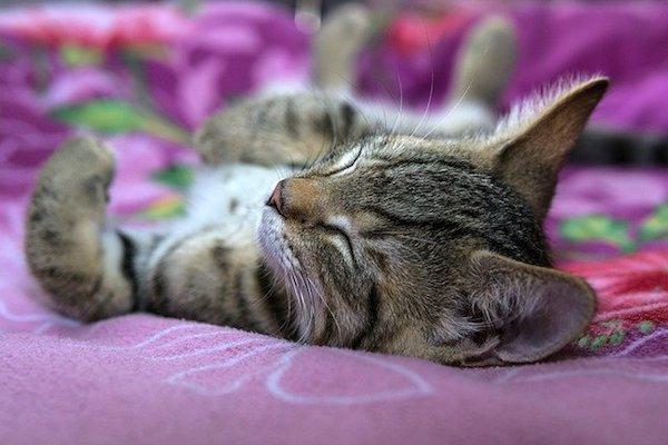 gatti dormono a testa in su