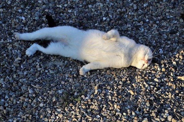 perché gatti dormono testa in su