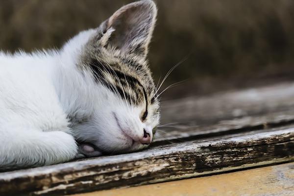 gattino che si riposa